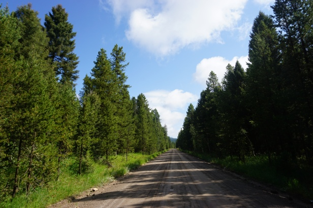 trees&road